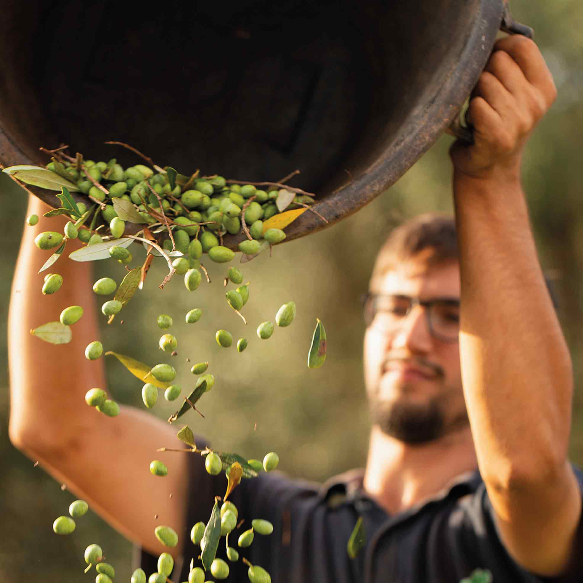 Olive harvest 2019: an overview